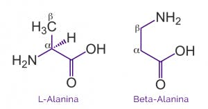 beta alanina bodybuilding