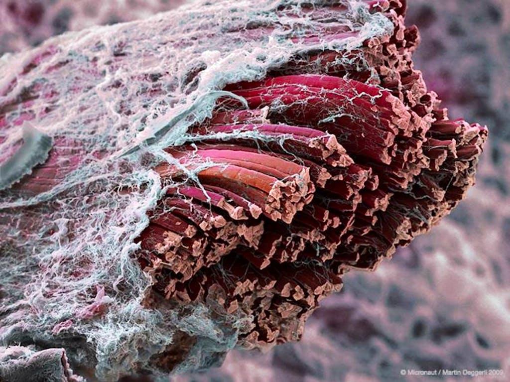 sintesi proteica muscolare