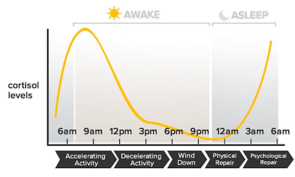 ciclo sonno veglia