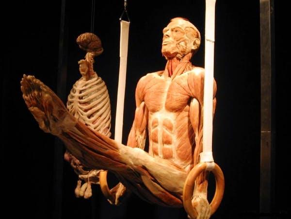 striature muscoli