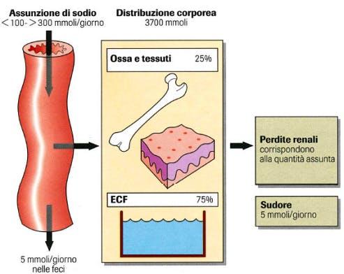 sodio cellulite