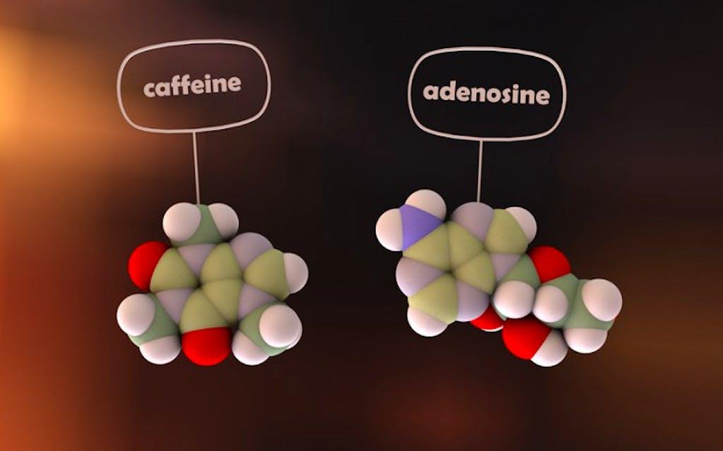 caffeina adenosina