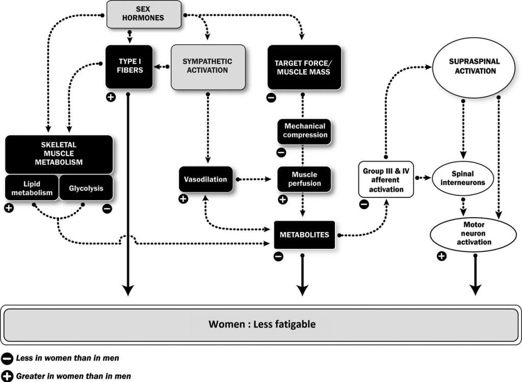 donne-e-bodybuilding