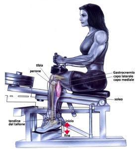 esercizio calf seduto