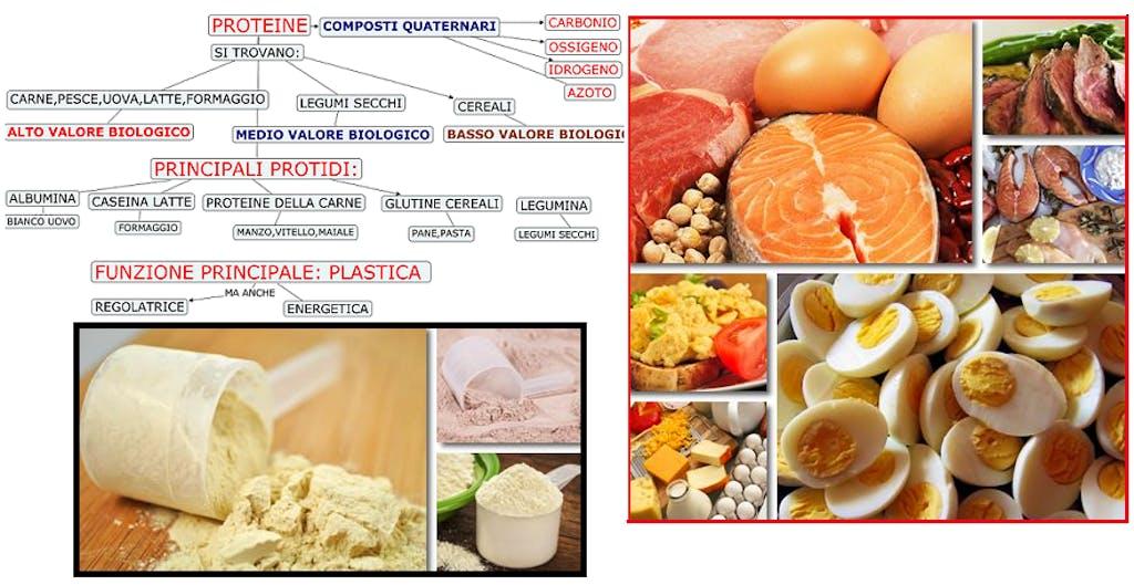 Macronutrienti: le Proteine (anche in polvere
