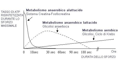 metabolismo-aereobico-e-anaerobico