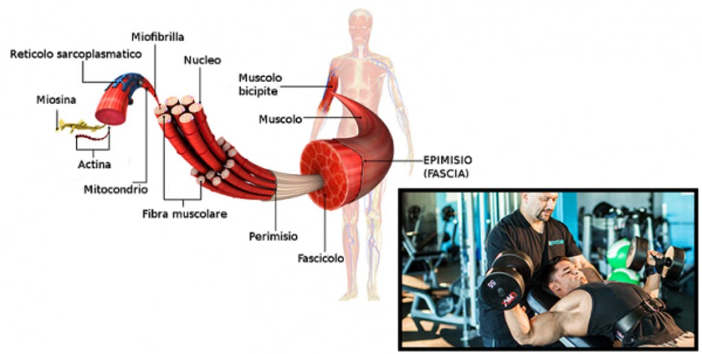 grande sconto rapporto qualità-prezzo preordinare L'allenamento FST-7: il metodo - Bodybuilding-Natural.com
