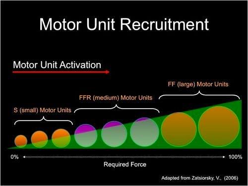 reclutamento-unita-motorie