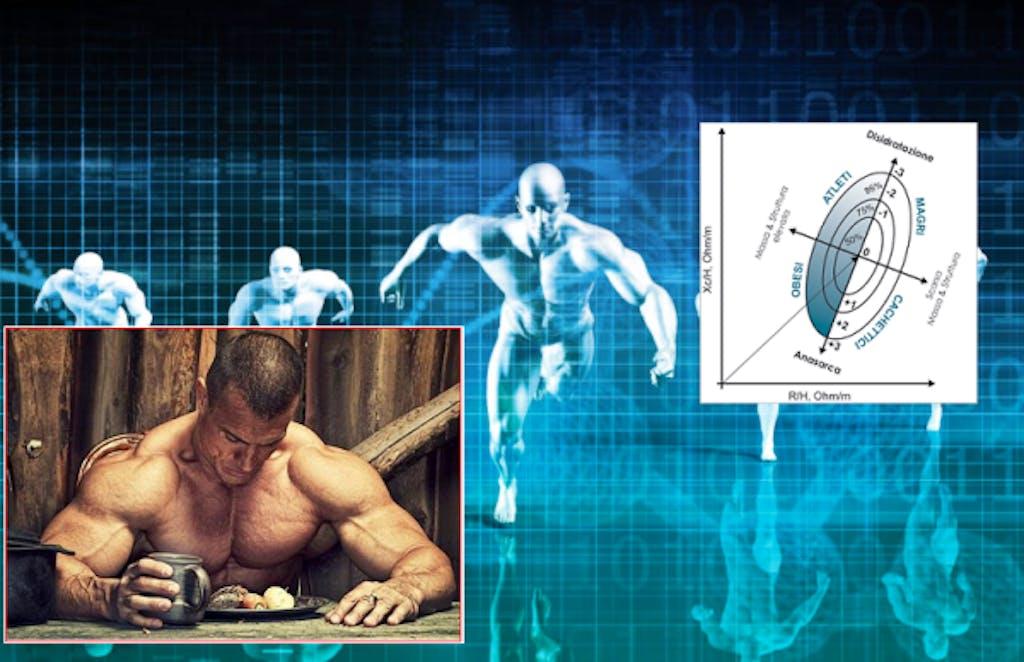 grafici bodybuilding