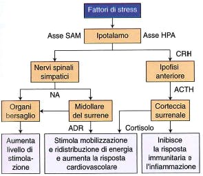 sovrallenamento-stress