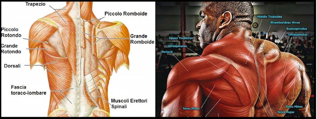 il più grande sconto online in vendita qualità eccellente L'allenamento del dorso: specializzazione - Bodybuilding ...